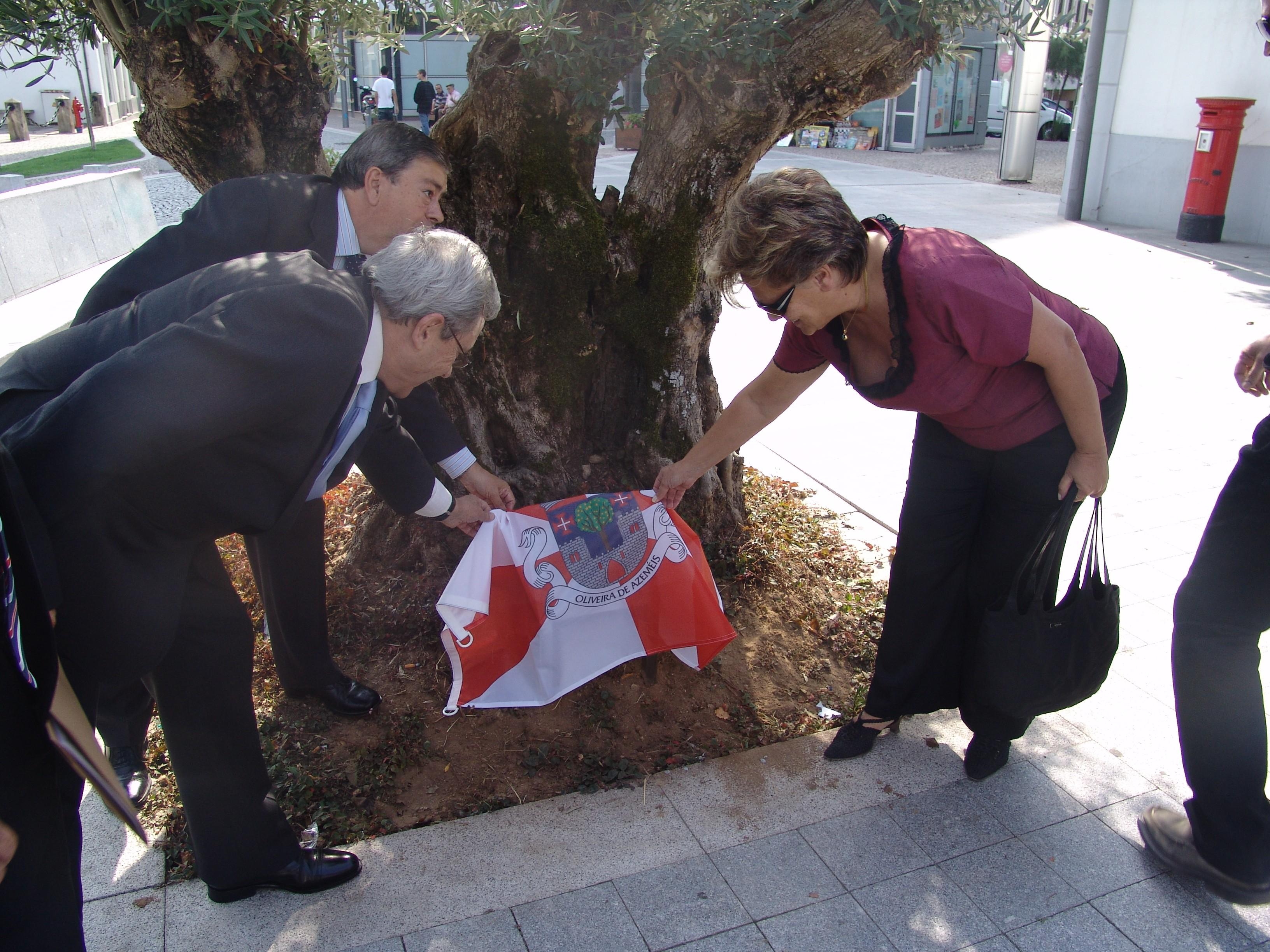 Cerimónia de certificação da oliveira em frente à Câmara Municipal