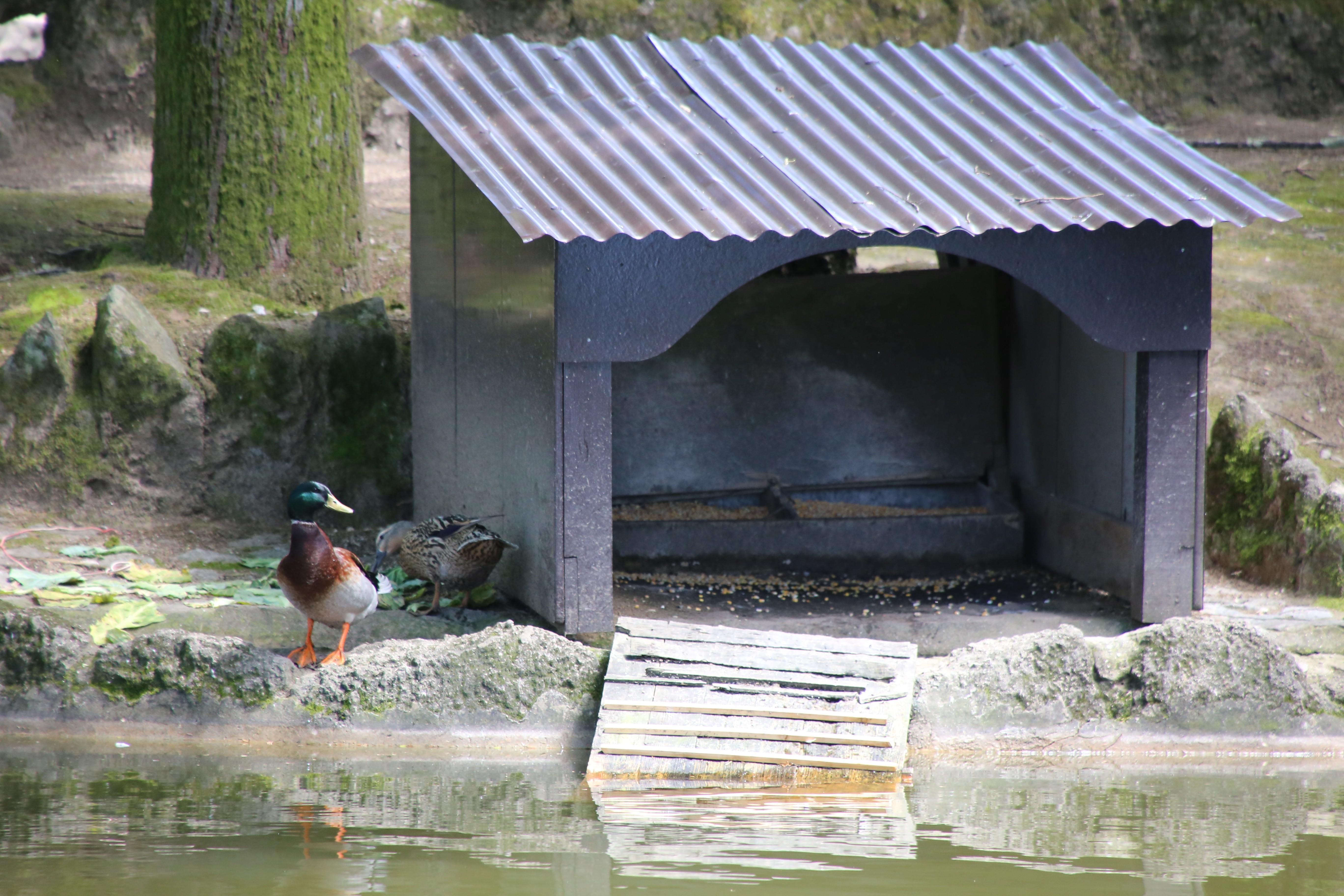 Abrigo dos Patos